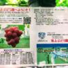 新潟市近郊の秋のおでかけ!聖籠町観光ぶどう園に今年も行ってきた♪